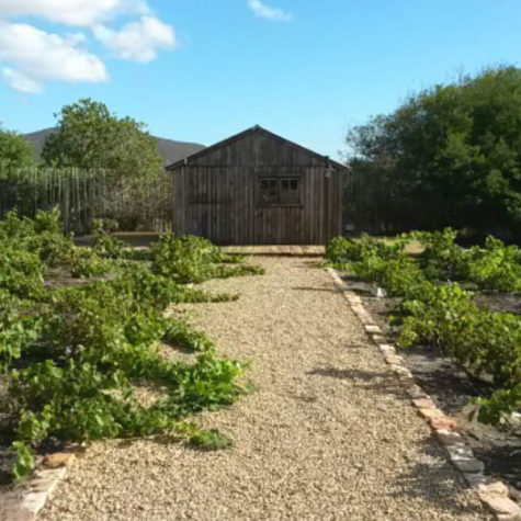 Tone-Alexander---Old-Cape-Farm-Road-Noordhoek.3